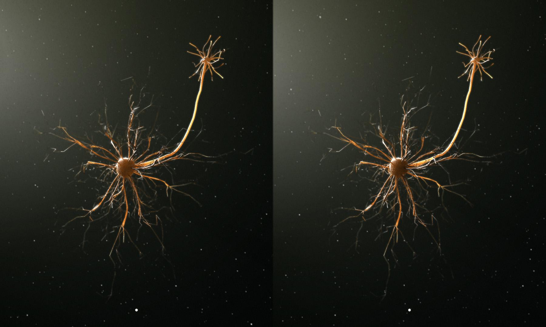 neuron_3d.jpg