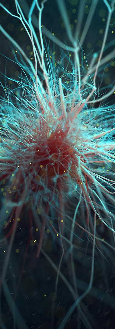 Microglial Cell