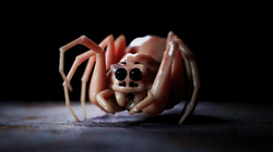 spider8.png