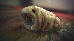 Zombug Larva