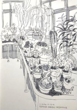 Cacti at Reynolda