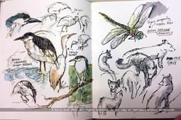 Night Herons