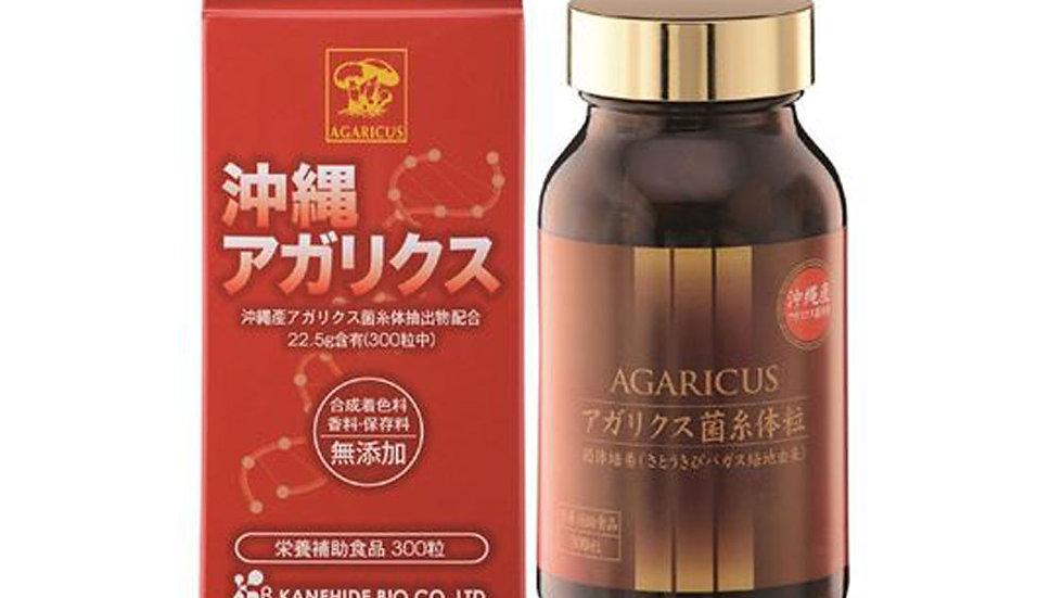 OKINAWA AGARICUS MYCEL Nấm Agaricus (Điều Trị Ung Bướu)