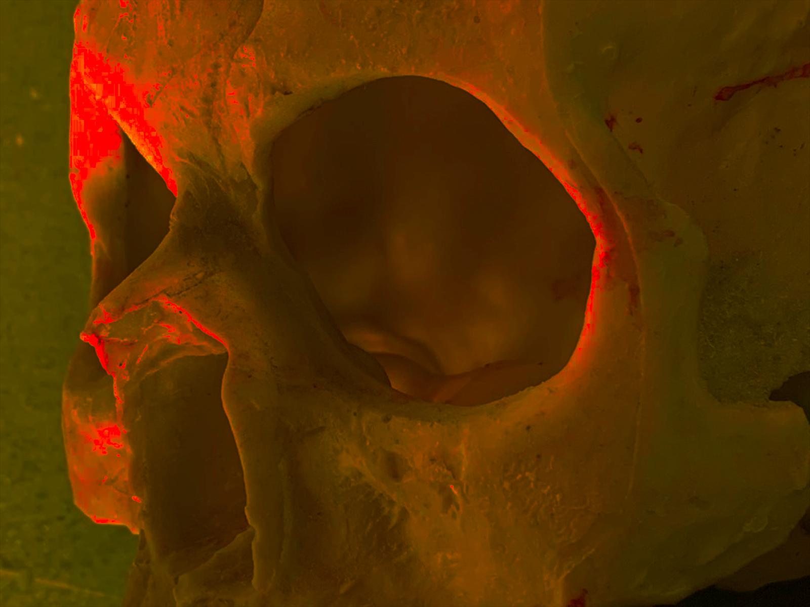 Polyester resin skull