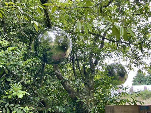 Wonder Tree, 2021 installation, Owhango Summer Sculpture Show