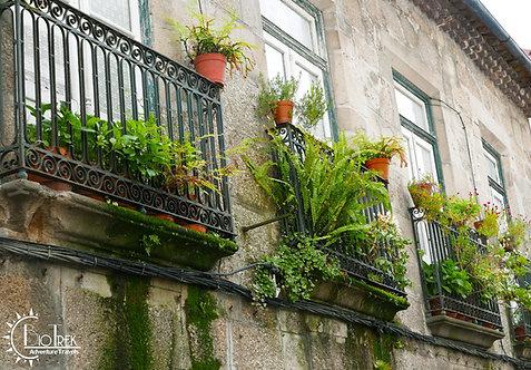 Portugal Ferns