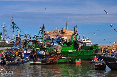 Harbor Essoria