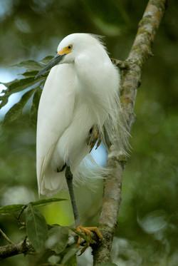 bird .jpg