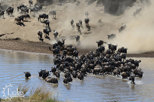 Wildabeast Crossing