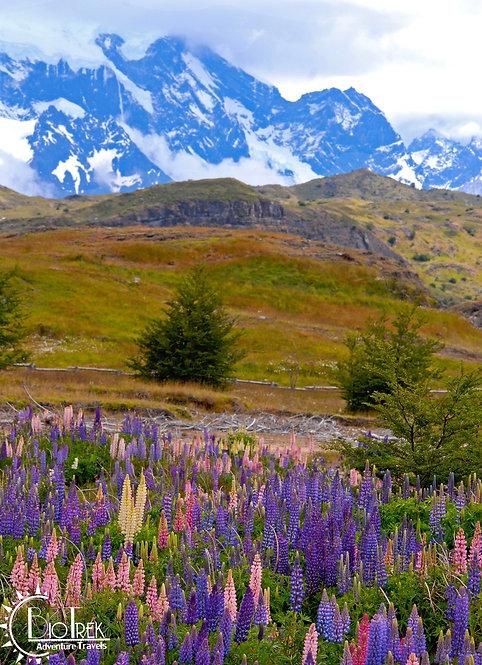 Wild Flower Vista