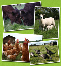 about_livestock.jpg