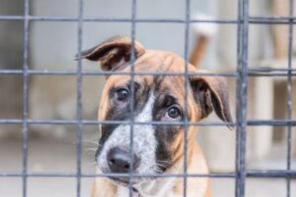 Laurens County Animal Shelter