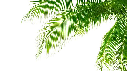 palmss.jpg