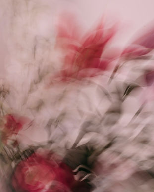 Bloemen 3_5.jpg