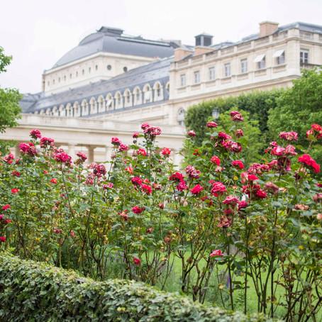Roses in Palais Royal