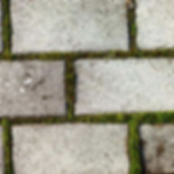 pflaster-moos-steinreinigung.jpg