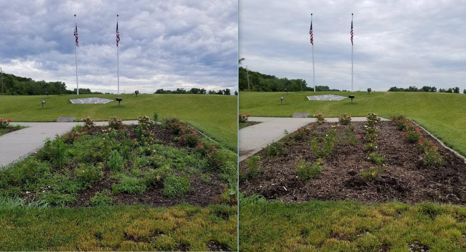 Rose Beds - Before and After