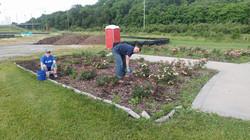 Volunteers Pulling Weeds