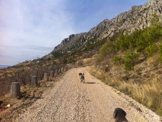Trekking, nordic woking , dog trekking or canicross?