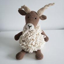 Racka sheep