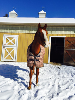 Advent Retreat_Pippen in snow