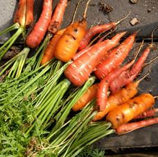GCE Architecture Carrots