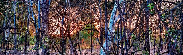 australian-bush-2791120_1920-(2).jpg