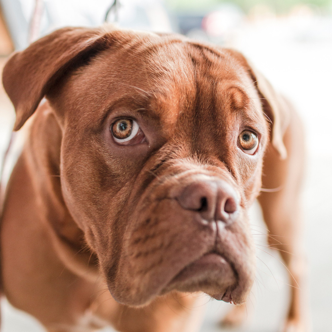 Close up shot of Dog.jpeg