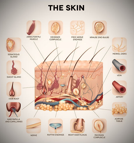 Learn-more-about-your-skin-at-Dermatology-Specialists-of-Charlotte-963x1024_edited.jpg