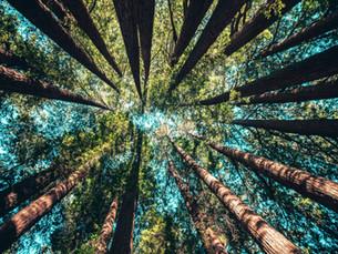 Лесные ресурсы. Лесная и деревообрабатывающая промышленность.