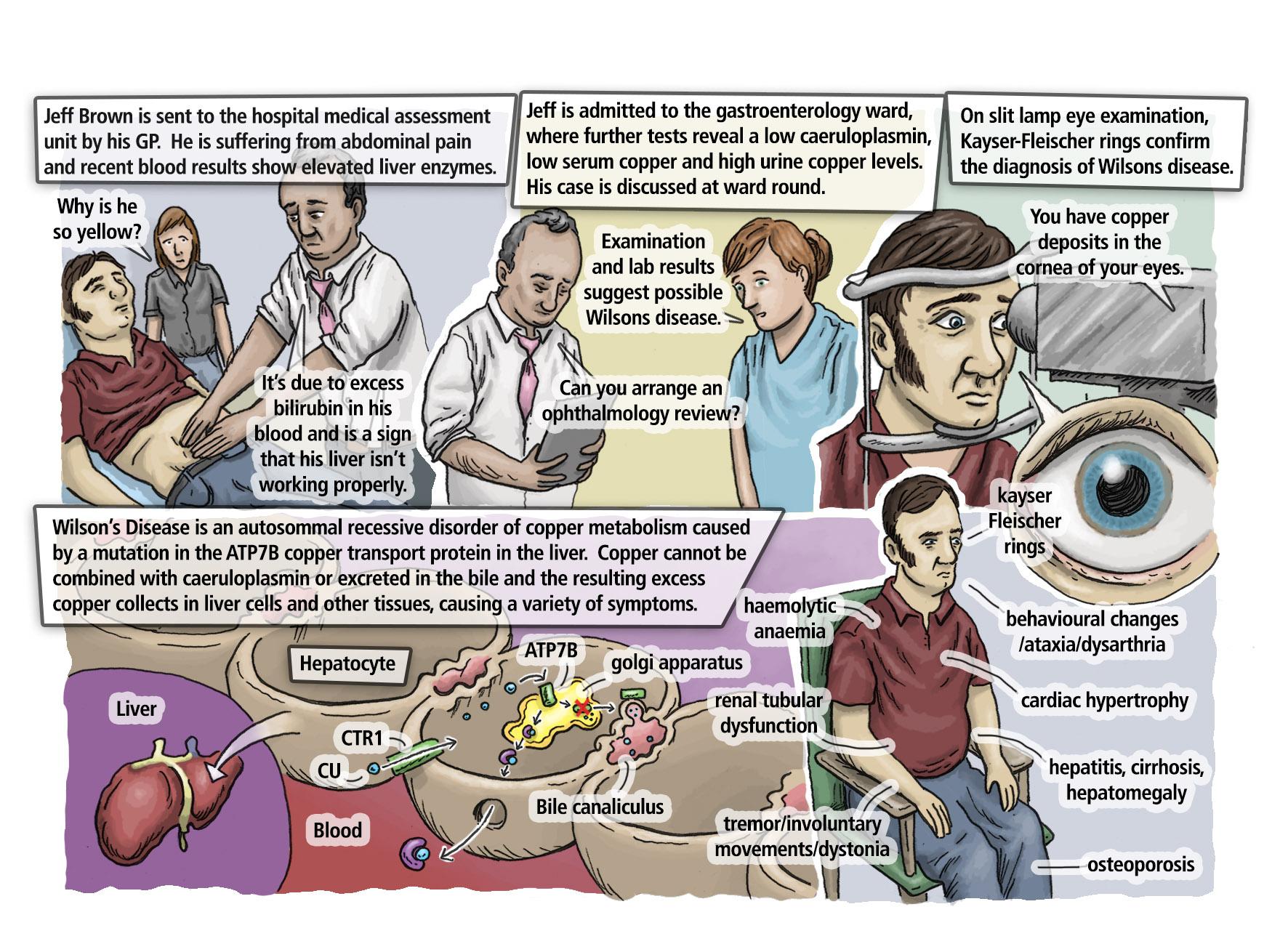 Biochem Ch 8 case 7 colour.jpg