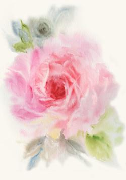 pink rose-1
