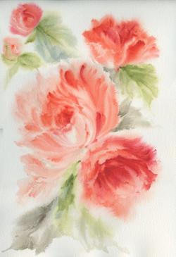 orange rose-2