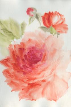orange rose-1