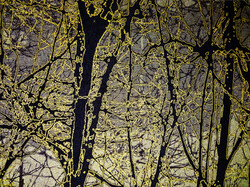 Jin Hwan CHO_size 71x53 inch_The WINDOW of MY SPIRIT_2014s.jpg