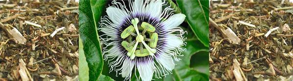 pssionflower.jpg