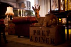 Pret Deer