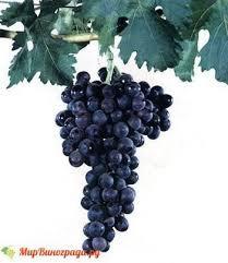 Виноград красный 1 кг.