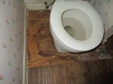 Mold growth around a toilet