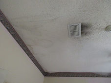 Mold growth on a ceiling