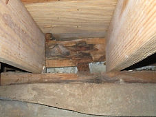 Mold growth in a crawl space