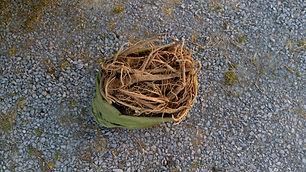 Bull Thistle (Cirsium vulgare) (4).jpg