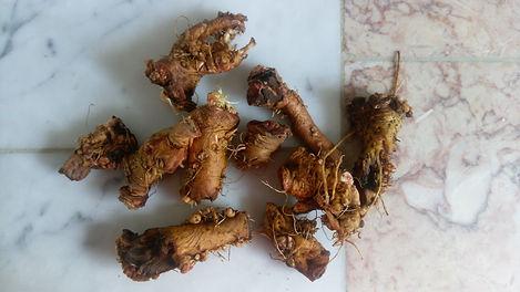 Dandelion (Taraxacum officinale) (3).jpg