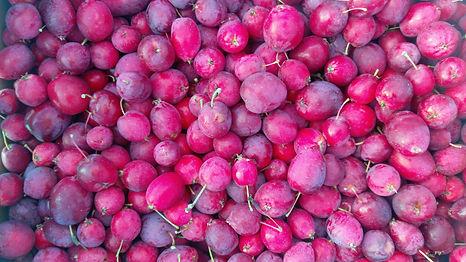 Crab Apples (Malus sp.).jpg