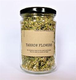 Yarrow Flowers.jpg