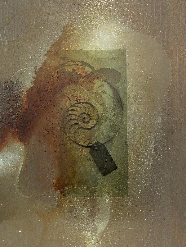 ORG-Nautilus.jpg