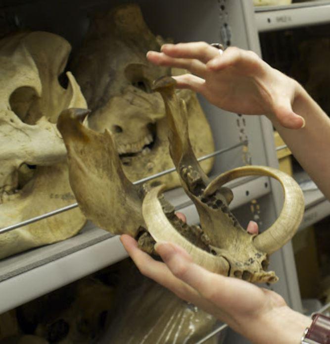 handling a specimen