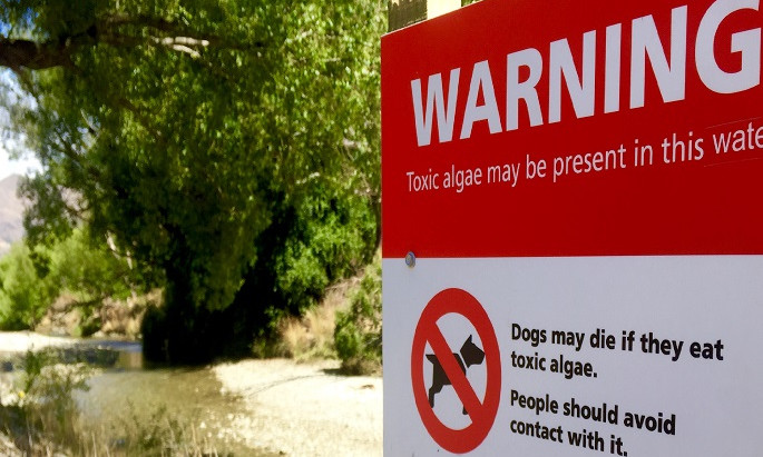 Examining The Risk of Toxic Algae And Poison In The Wanaka Area