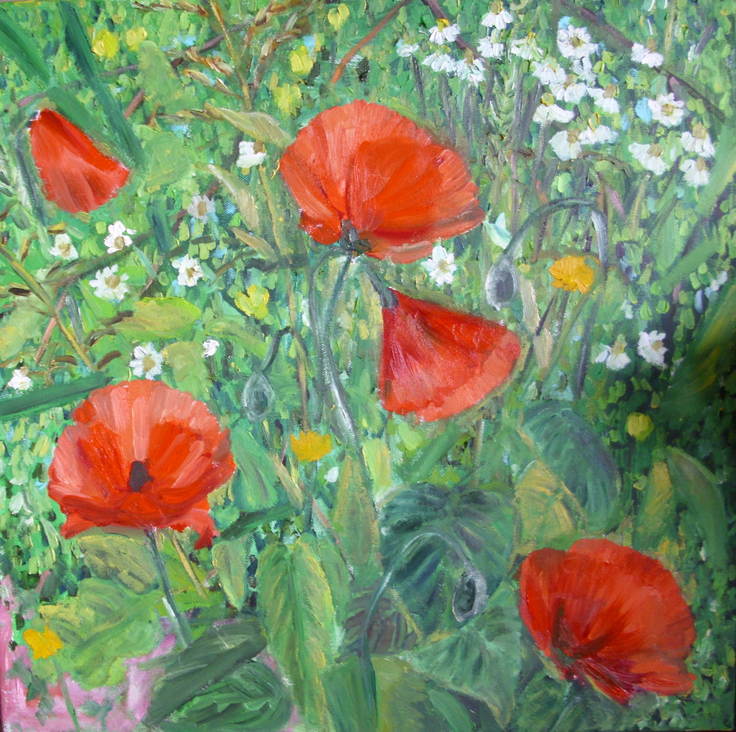 Poppies at spring (frag.)