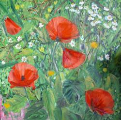 Poppies at spring (frag.)